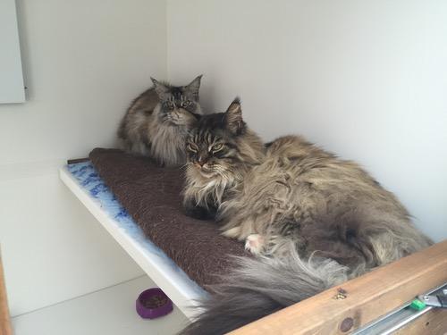 Kitty and Koko