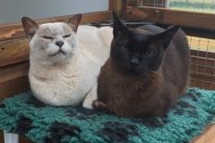 Chino and Kiki